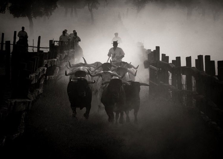 Corredero, toro, campo, mayorales