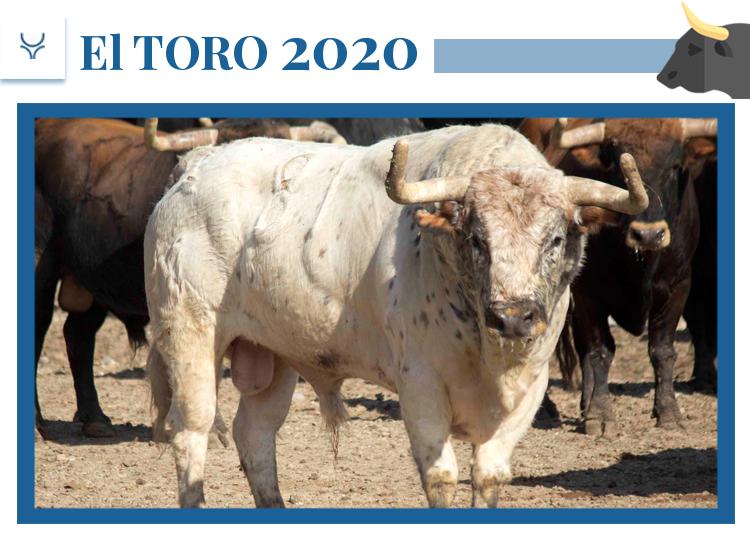 El 2020 de Núñez del Cuvillo: una camada para las grandes ferias