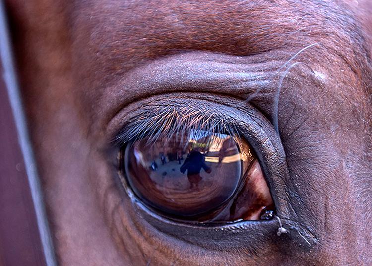 Detalle, caballo