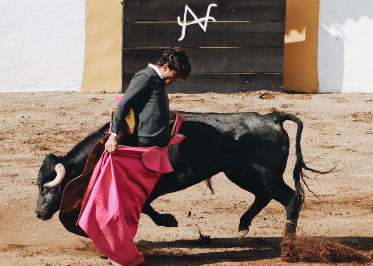 Eduardo Gallo, México, tentadero