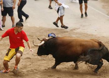 Los ganaderos de 'Bous al Carrer' se rebelan