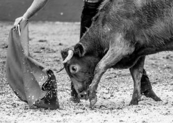 La hipocresía de Pacma denuncia un tentadero legal en la ganadería de El Pilar