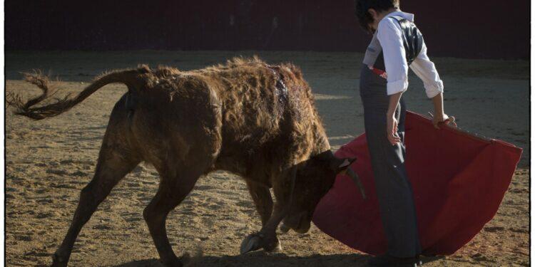 El último tentadero de Borja Domecq: pasado, presente y futuro en Jandilla