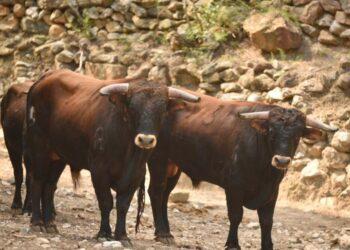 """Manuel Amador: 'El Certamen """"Promesas de nuestra tierra"""" es una fábrica de sueños para los novilleros, los ganaderos y los aficionados'"""