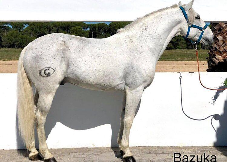 Muere el caballo 'Bazuka', una estrella de Léa Vicens