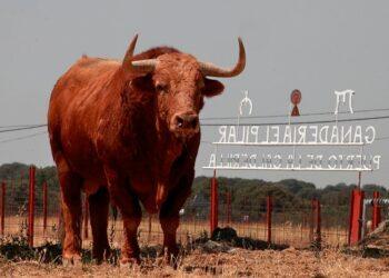 El Pilar, campo, Astorga, León