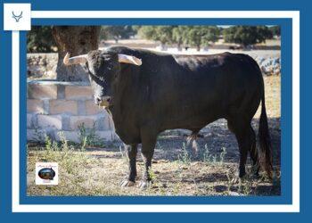 Los toros de Garcigrande y Domingo Hernández reseñados para Alcalá de Henares