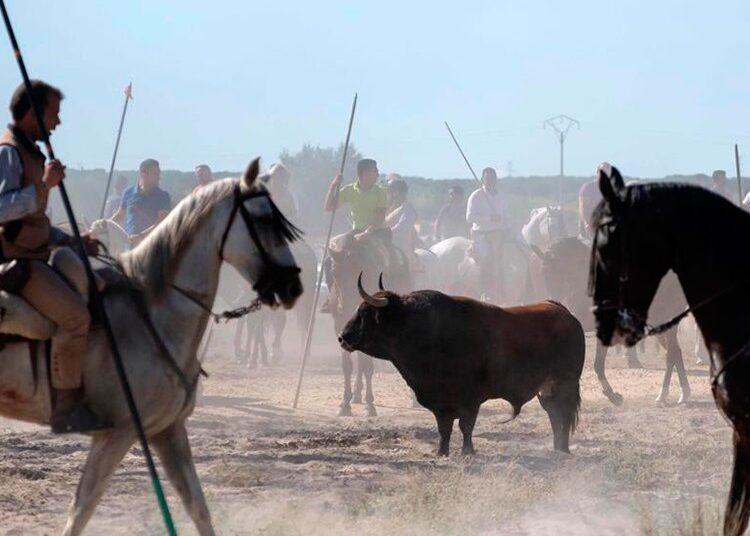 Toro de la Vega, Tordesillas, Valladolid, festejos populares, mundo rural