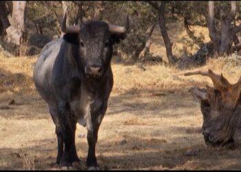 El Congreso del Estado Mexicano de Tlaxcala reconoce las ganaderías de bravo como reservas ecológicas
