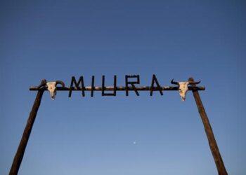 Un Juzgado de Madrid anula una sanción por afeitado a la ganadería Miura