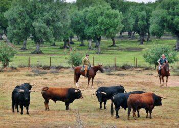 La UCTL recurrirá hasta el tribunal Europeo de Justicia si la nueva PAC discrimina a los ganaderos españoles