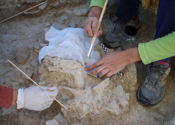 Descubren en la provincia de Sevilla un 'Cráneo de Uro' de la Edad del Cobre
