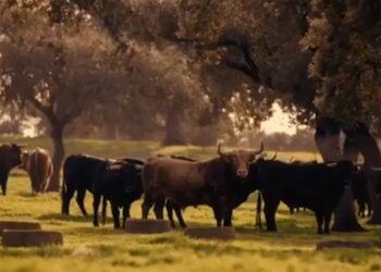Este es el aplastante potencial ecológico de las ganaderías de toro bravo