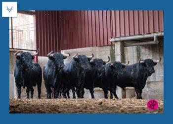 Fermín Bohórquez, líder ganadero y año en blanco para 500 ganaderías