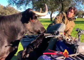 Miguel Ángel Perera, campo, vaca, ternero, labores de campo