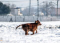 Bella Lucía, Julián Gómez Carpio, Fuentidueña de Tajo, Madrid, temporal Filomena, nieve, campo