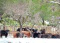 El Saliner, ganadería, Comunidad Valenciana, campo, nieve, reportaje fotográfico