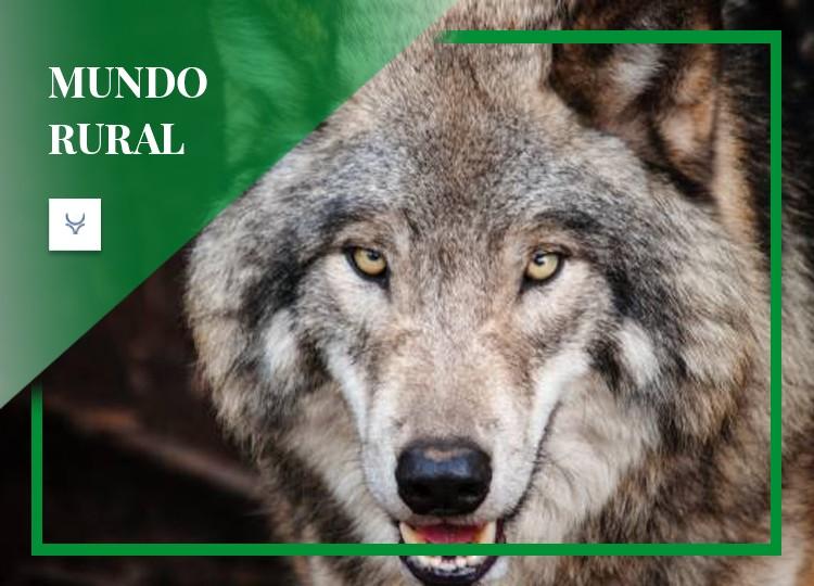 El 'uso' del lobo, en el terrorismo medioambiental