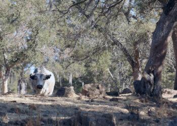 Entregan reconocimiento a Ganaderías Ecológicas en Tlaxcala