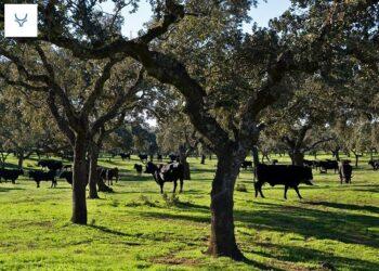 El gobierno andaluz pone en marcha un plan integral para el fomento del toro bravo