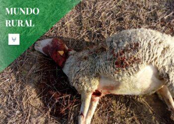 Los ganaderos salmantinos: 'Cansados por todo'