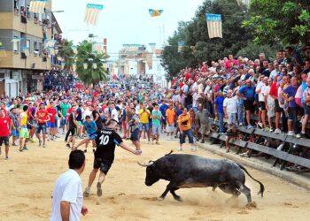 Festejos Populares, Bous al Carrer, Valencia, Comunidad Valenciana, toro en la calles