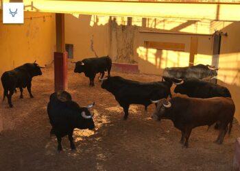 'Loreto', de Albarreal, abre la tarde en Bolaños de Calatrava