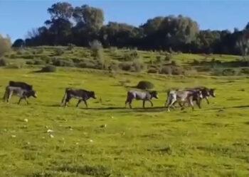 Los nuevos 'santacolomas' peruanos