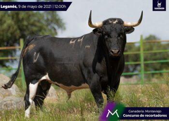 Serios Monteviejos para el concurso de recortadores de Leganés