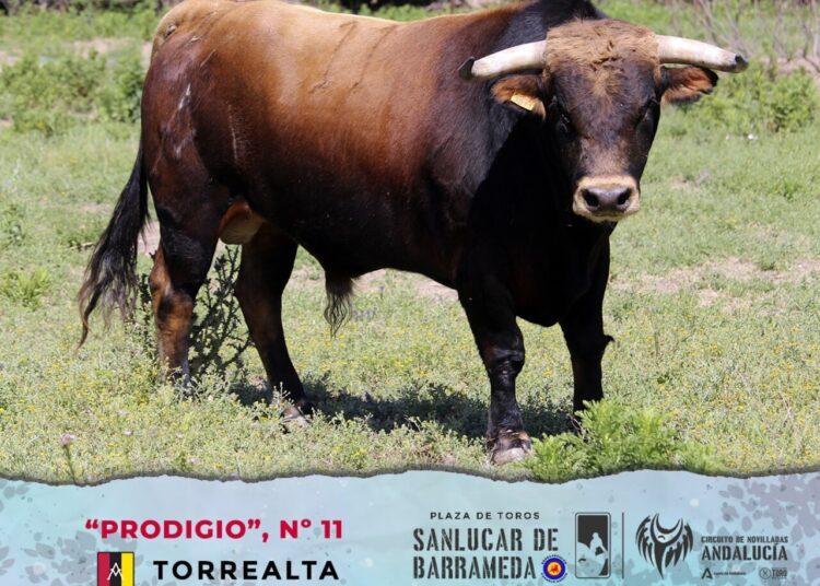 Torrealta, El Parralejo, Circuito de Novilladas de Andalucía, Liga Nacional de Novilladas