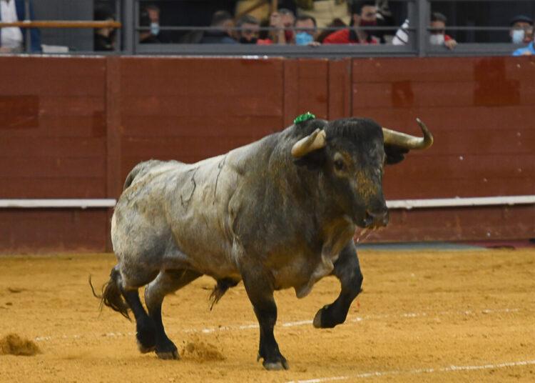 Adolfo Martín: 'Hay que resaltar lo bien que han estado los tres toreros con la corrida'