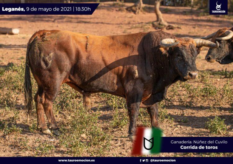 Los toros de Núñez del Cuvillo que cierran Leganés