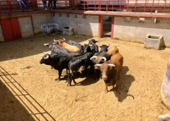Novillos de Fuente Ymbro en Córdoba I Prensa Lances de Futuro