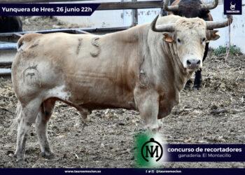 Yunquera de Henares, La Cardenilla, Toros de Fuenterroble, El Montecillo