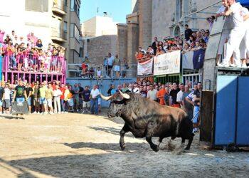 Festejos Populares, Bous al Carrer, toro en la calle, Burriana