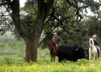 Guadarrama anuncia un elenco ganadero 'de lujo' con variedad de encastes
