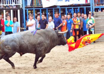 Bous al Carrer, festejos populares, toro en la calle, Castellón